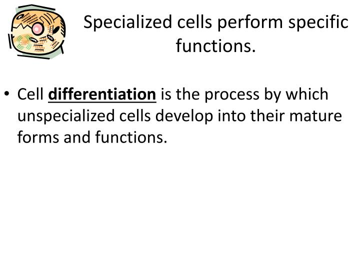 the specific functions of cells in the body From single-celled organisms such as bacteria to humans, cells are the basic structural and functional units of life an adult human body consists of more.