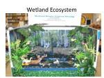 wetland ecosystem