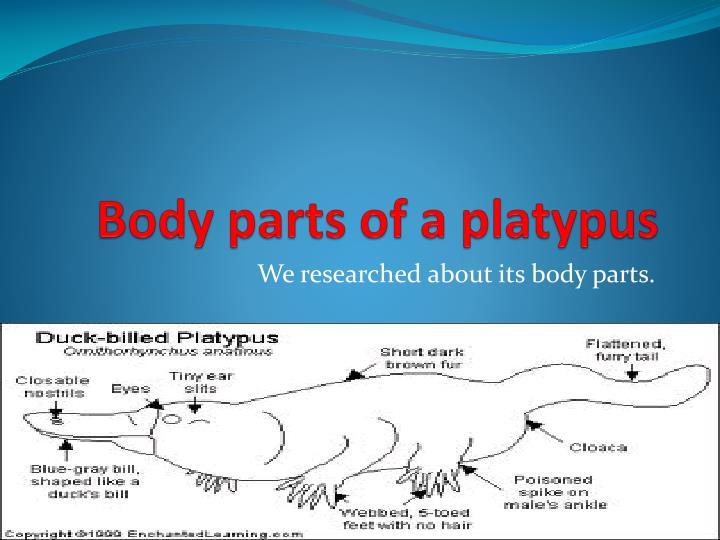 Body parts of a platypus