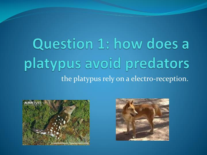 Question 1 how does a platypus avoid predators