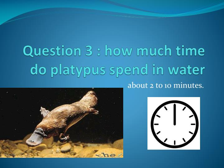 Question 3 : how much time do platypus spend in water