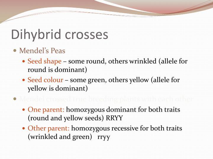 Dihybrid