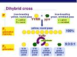 dihybrid cross1