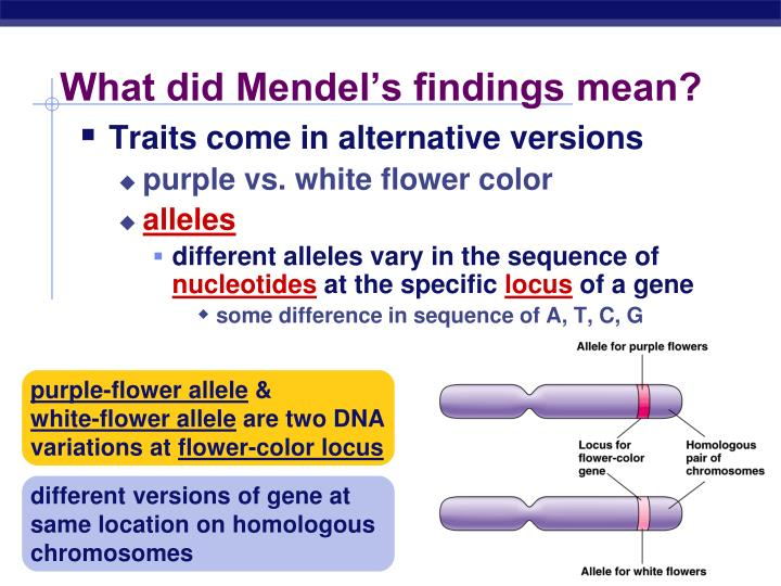 What did Mendel's findings mean?