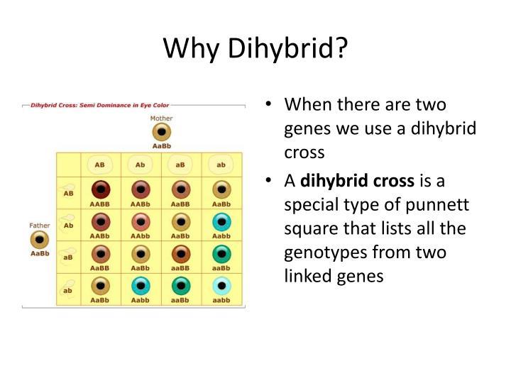 Why Dihybrid?