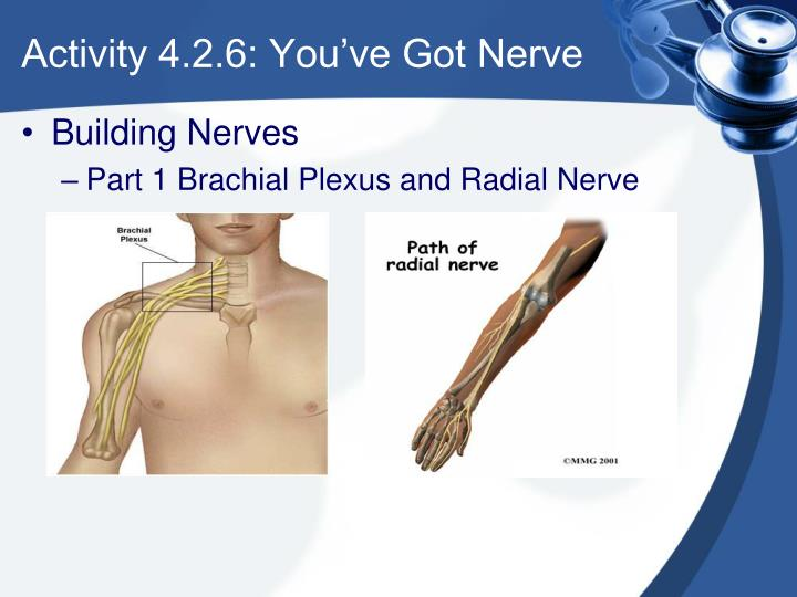 Activity 4.2.6: You've Got Nerve