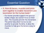 essential question6