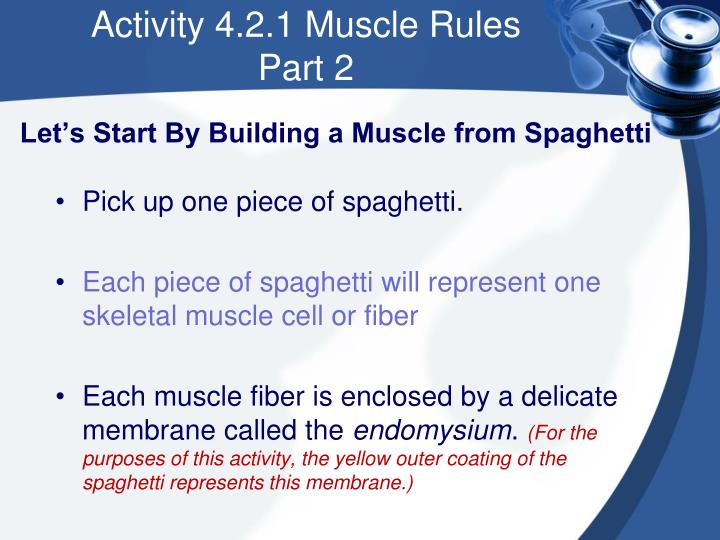Let's Start By Building a Muscle from Spaghetti