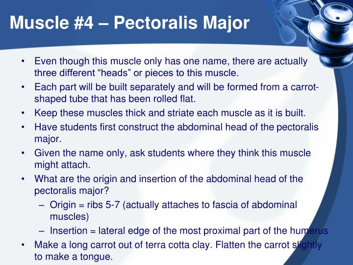 Muscle #4 – Pectoralis Major