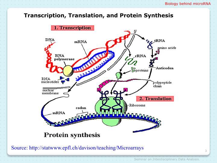 Biology behind microRNA