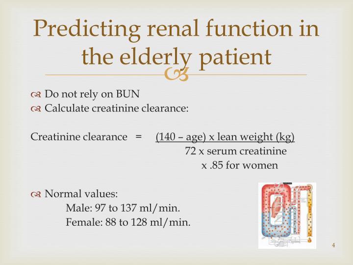 Predicting renal function in the elderly patient