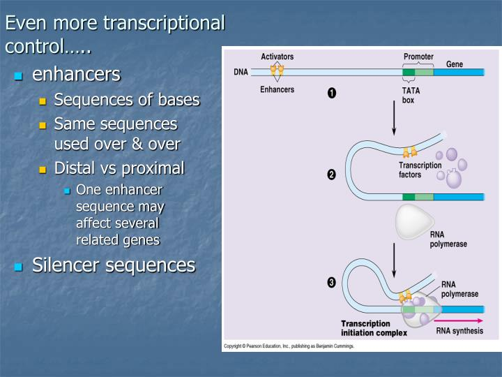 Even more transcriptional