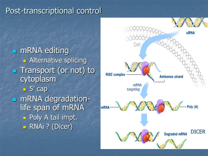 Post-transcriptional control