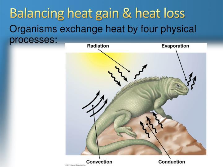 Balancing heat gain & heat loss