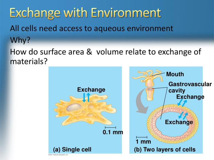 Exchange with Environment