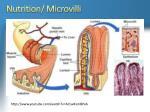 nutrition microvilli