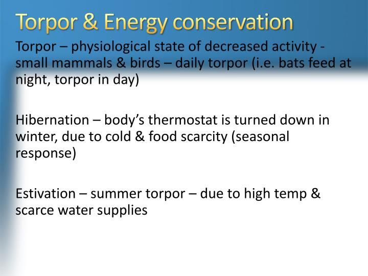 Torpor & Energy conservation
