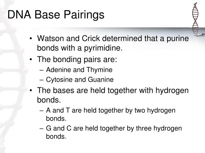 DNA Base Pairings