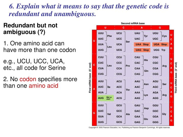 6. Explain what it means to say that the genetic code is redundant and unambiguous.