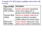 concept 17 5 rna plays multiple roles in the cell a review