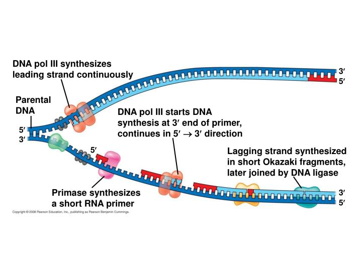 DNA pol