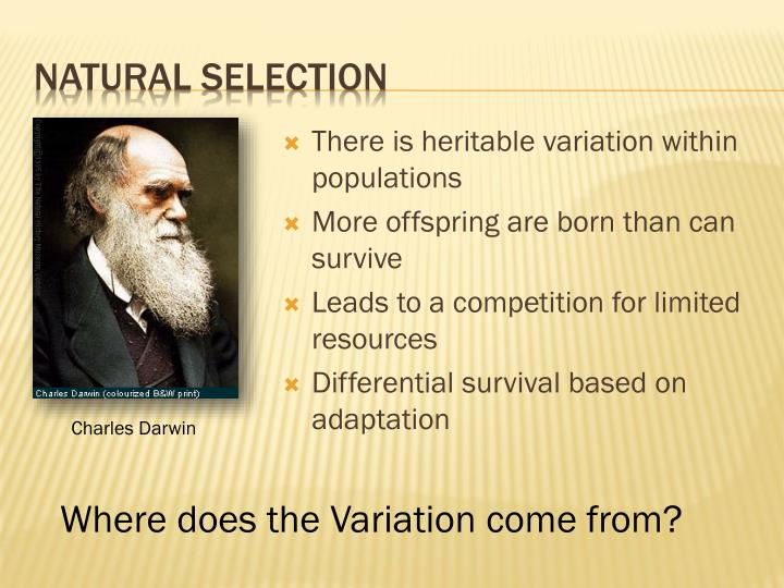 How Does Competition And Variation Result In Natural Selection