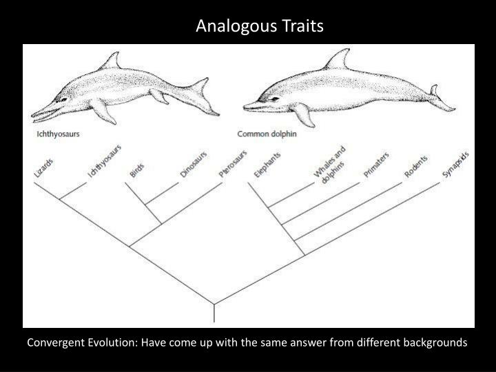Analogous Traits