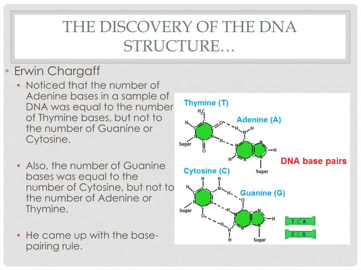 discovery of dna Used a blender and discovered that the genetic material in bacteriophages is dna and not protein james watson and francis crick won the nobel prize in 1962 for their model of the dna double helix.
