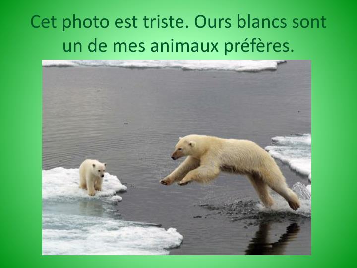 Cet photo est triste. Ours blancs sont un de mes animaux préfères.