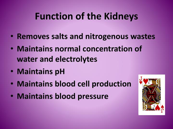 Function of the kidneys