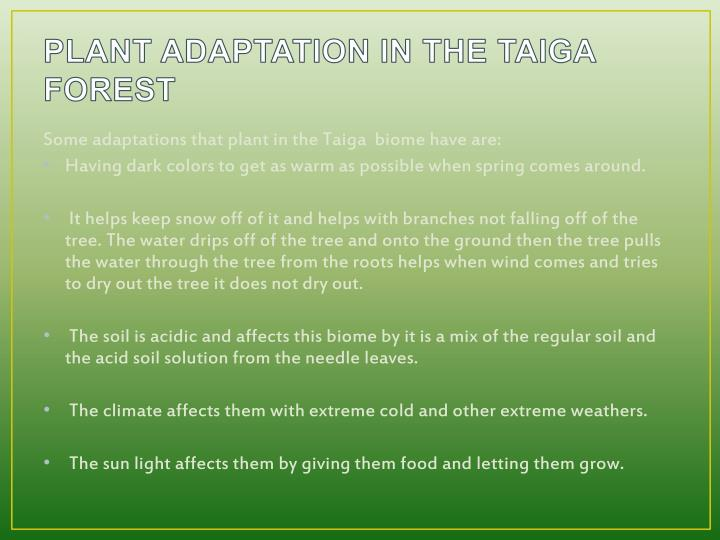 PLANT ADAPTATION IN THE TAIGA FOREST