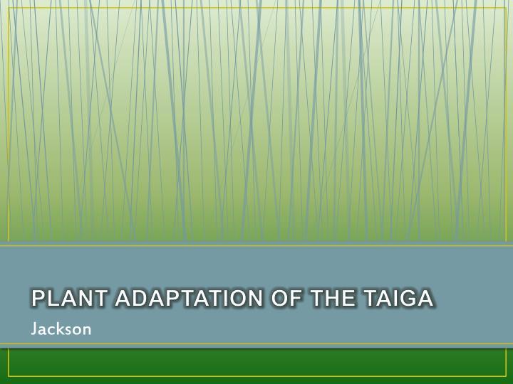 PLANT ADAPTATION OF THE TAIGA