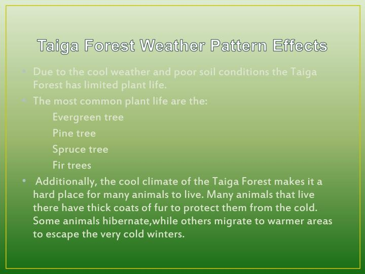 Taiga Forest Weather Pattern Effects