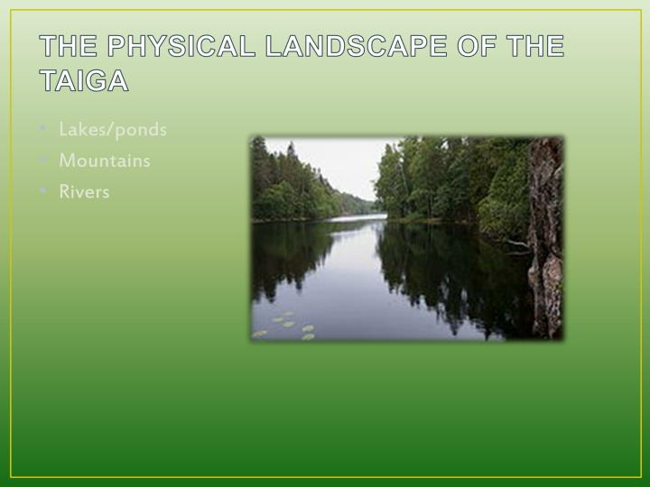 THE PHYSICAL LANDSCAPE OF THE TAIGA