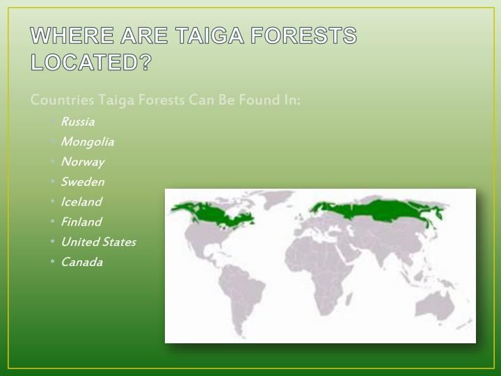 WHERE ARE TAIGA FORESTS LOCATED?