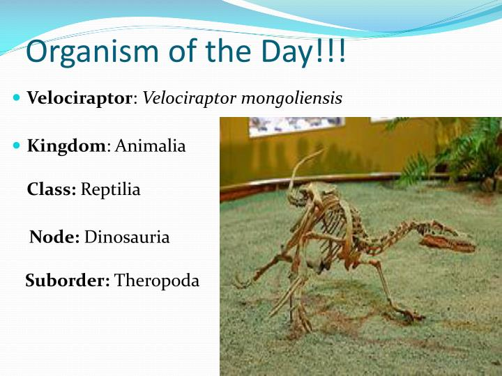 Organism of the Day!!!