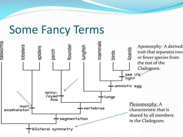 Some Fancy Terms