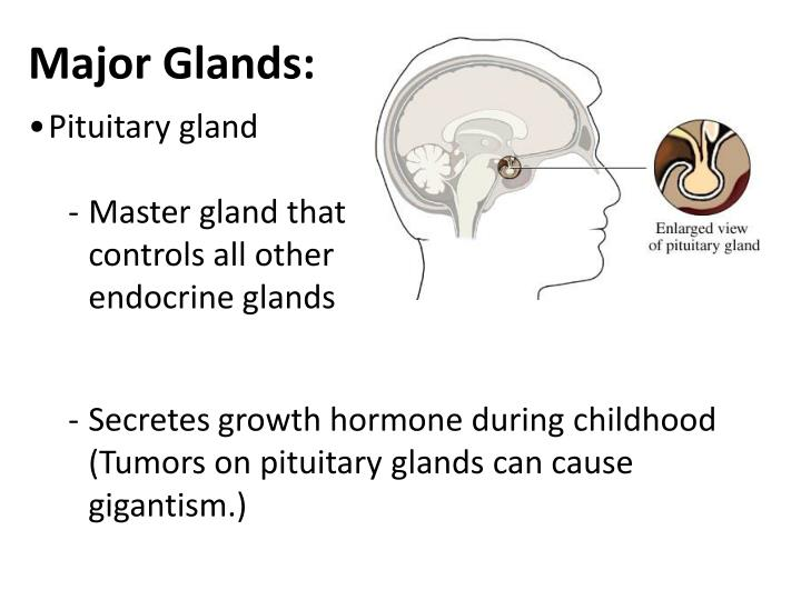 Major Glands: