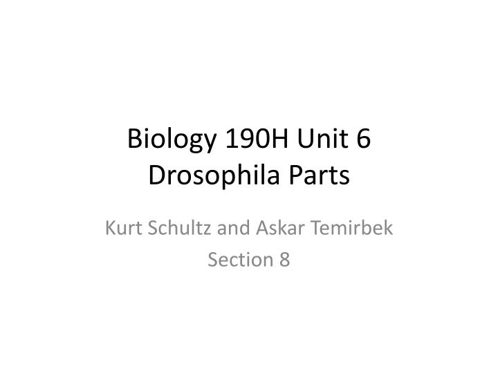 biology 190h unit 6 drosophila parts