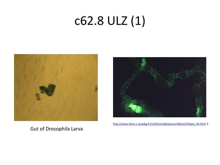 c62.8 ULZ (1)