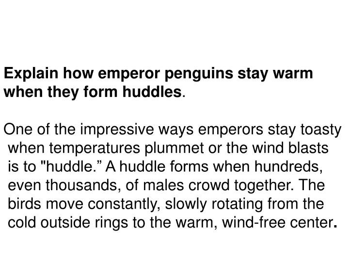 Explain how emperor penguins stay warm