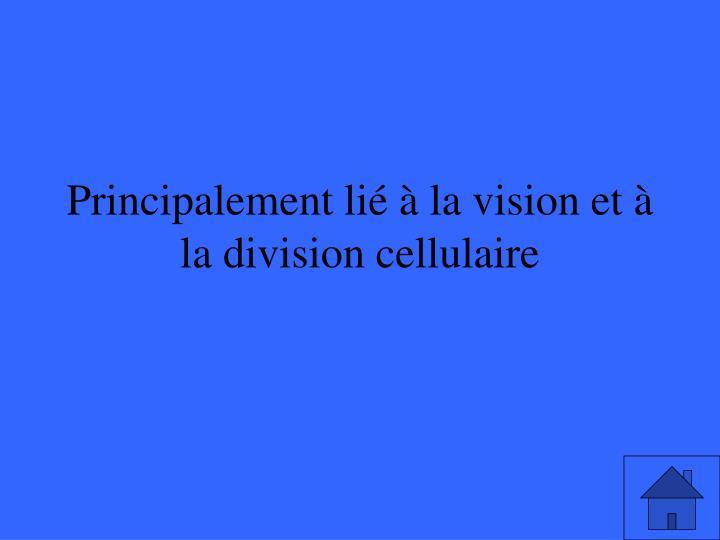 Principalement lié à la vision et à la division cellulaire