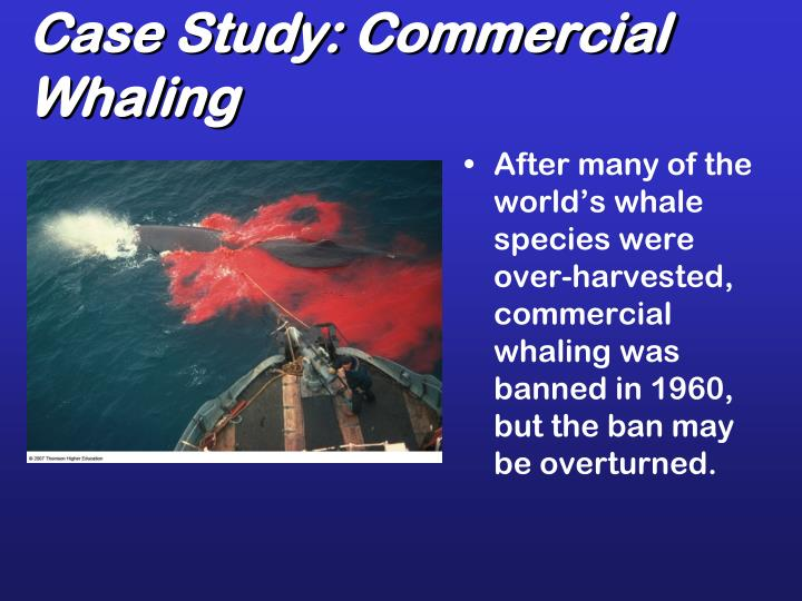 Case Study: Commercial Whaling