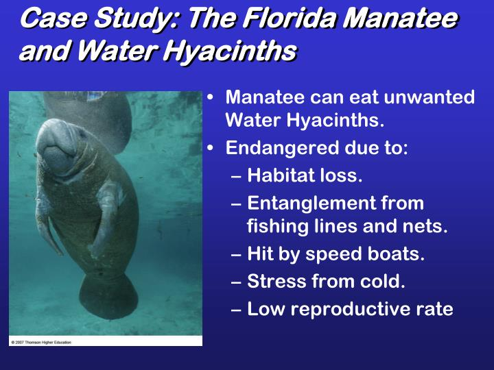 Case Study: The Florida Manatee and Water Hyacinths