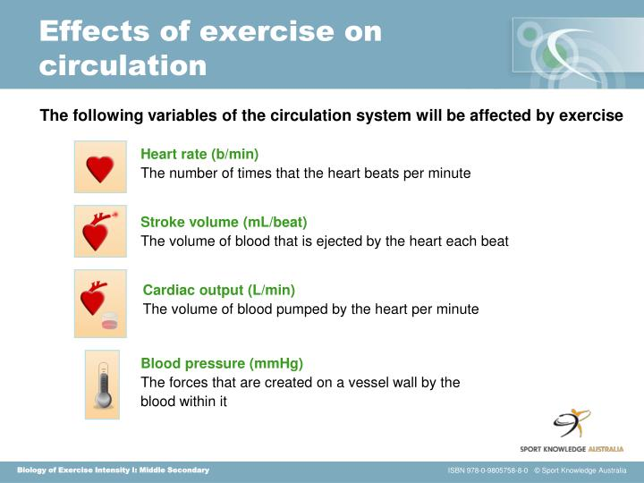 Effects of exercise on circulation