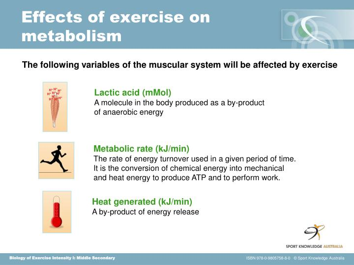 Effects of exercise on metabolism