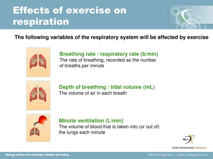 Effects of exercise on respiration