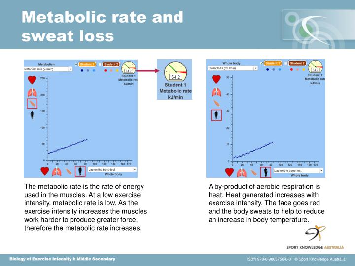 Metabolic rate and