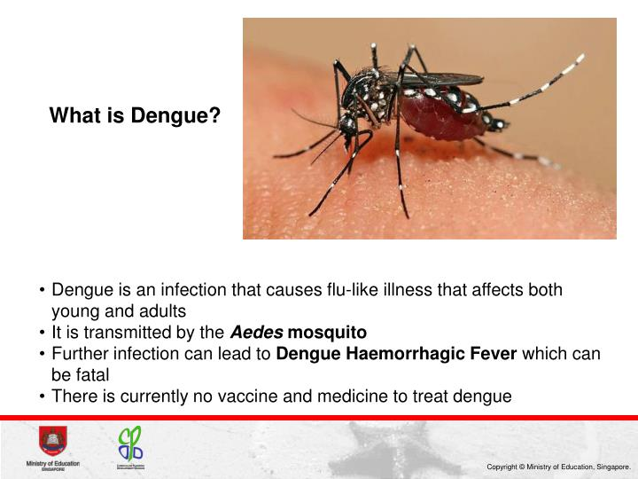 What is Dengue?