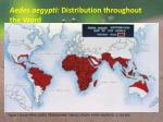 aedes aegypti distribution throughout the word